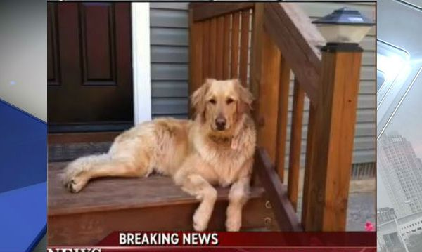 Petco admits fault for dog's death after store grooming (Image 1)_33179
