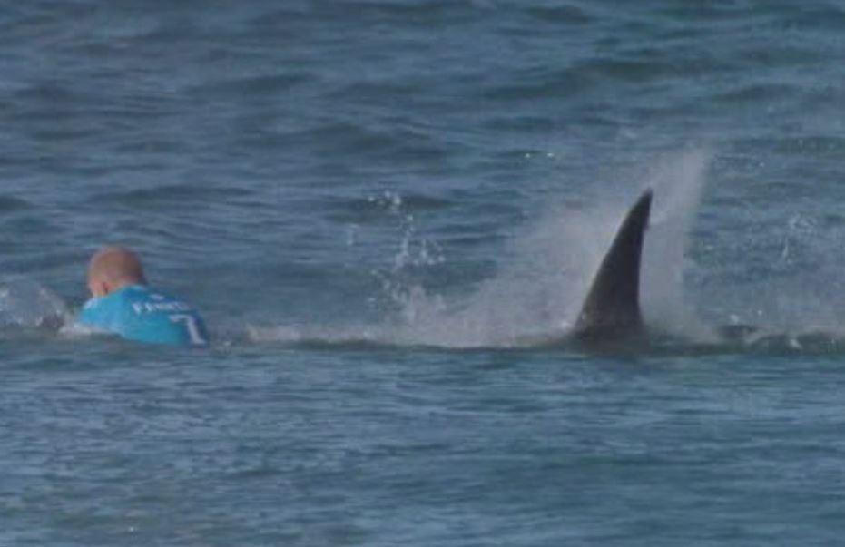 shark34d_49055