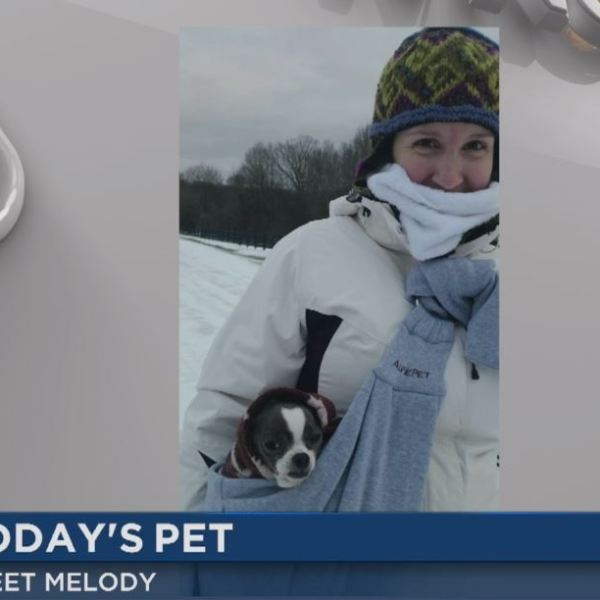 wncn today's pet melody_128537