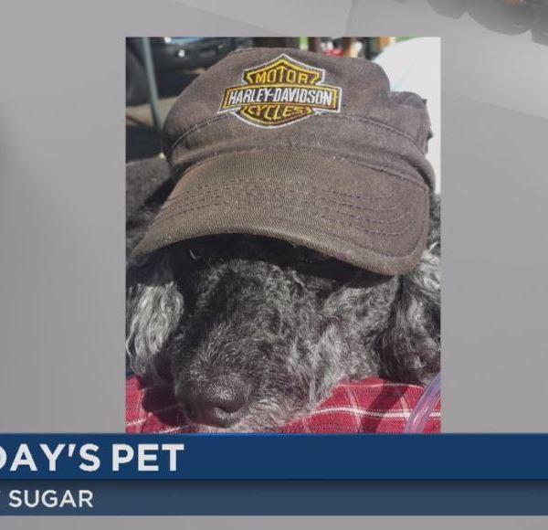 wncn today's pet - sugar_125118