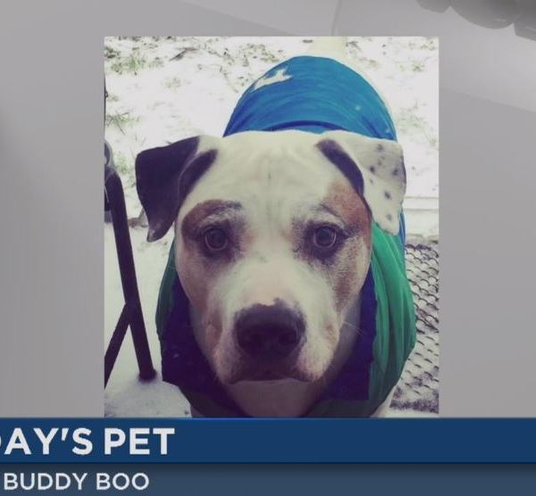 wncn today's pet buddy boo_135225