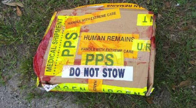 human-remains_159924