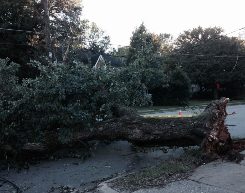 tree-down-raleigh_272209