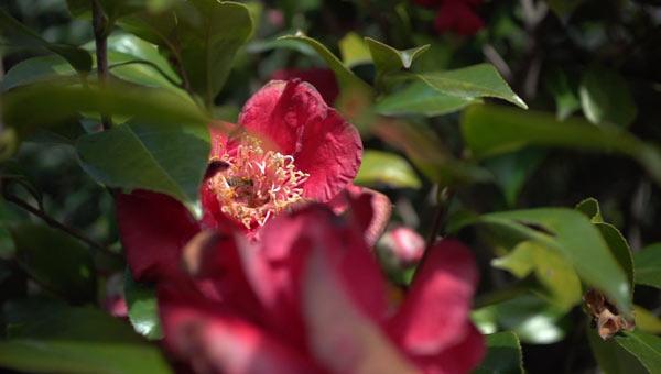 flower bee generic_310984