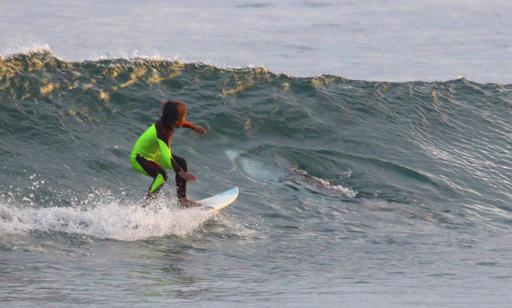APTOPIX Australia Photo Bombing Shark_327077