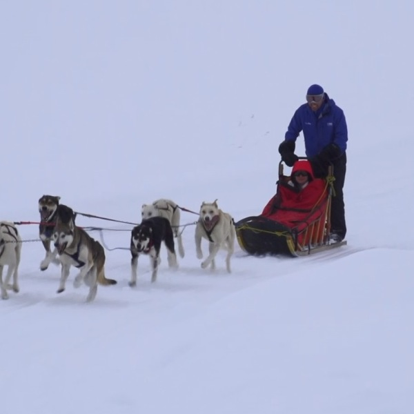 wes-dog-sled2_323736