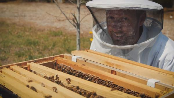 bees_384033