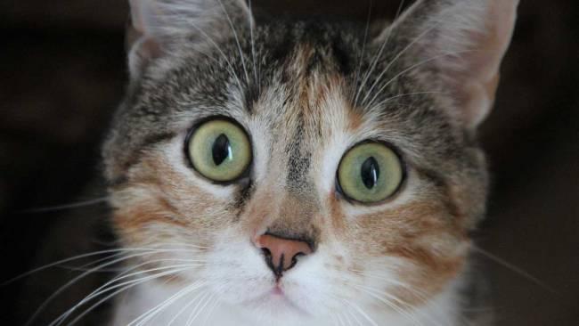 cat-surprised-generic_394778