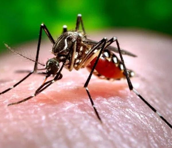 west nile mosquito_488063