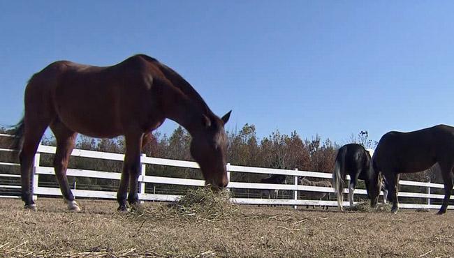 horses generic_541613