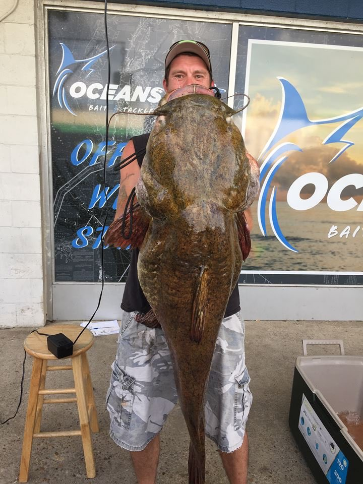 What a catch! Fisherman reels in giant catfish in Virginia