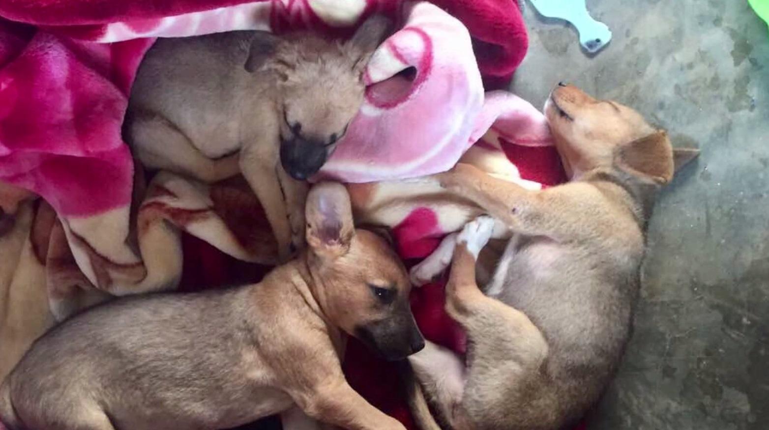 uganda puppies kelsey sabo_1527114989876.jpg-873702560.jpg