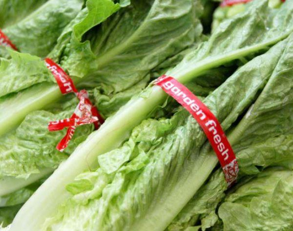romain lettuce_1527879529969.JPG.jpg