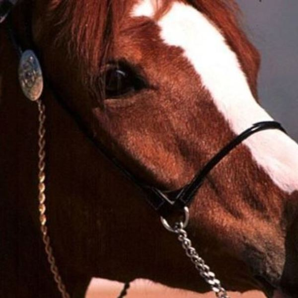 horse generic_1533428970009.JPG.jpg