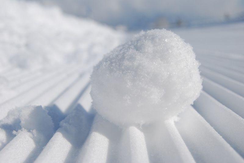 snowball generic_1533118880376.jpg.jpg