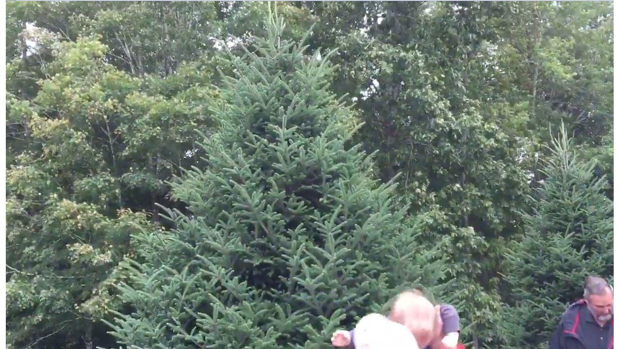 RAW_VIDEO__White_House_Christmas_tree_ch_0_20180924184627