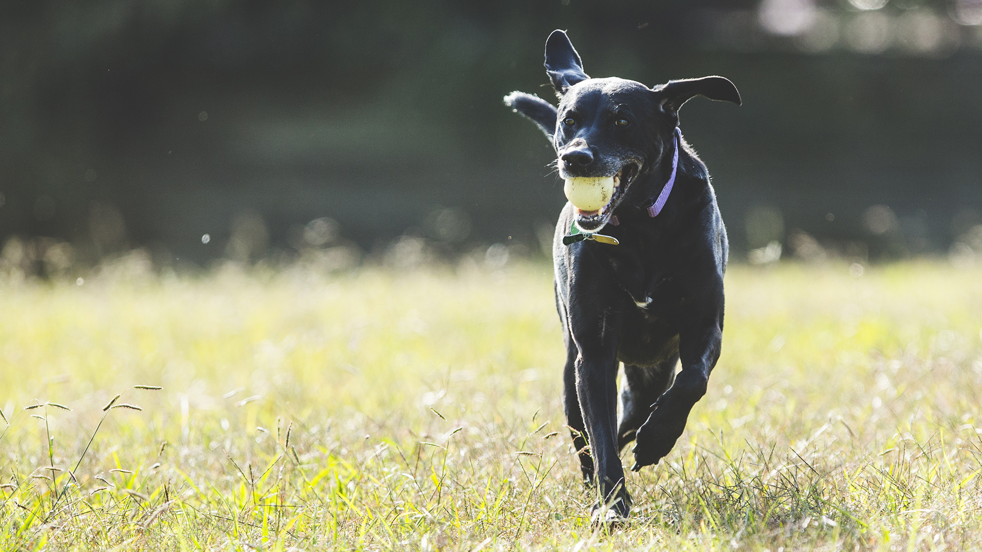 Pet-friendly hurricane shelters in NC