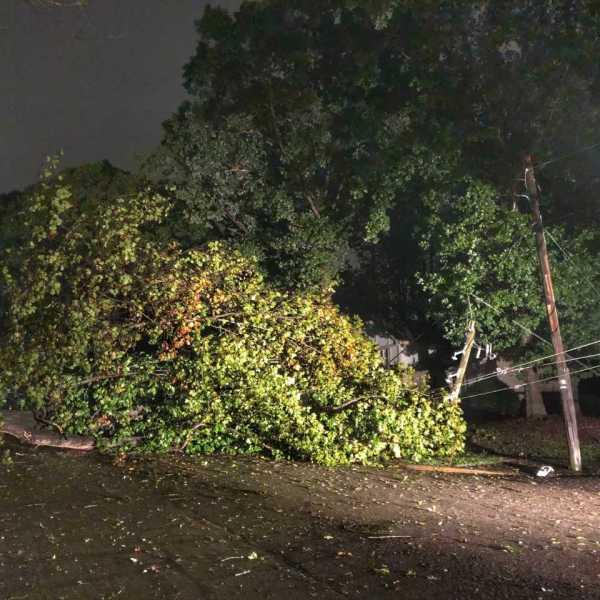 fallen tree north hills_1539309066226.jpg.jpg