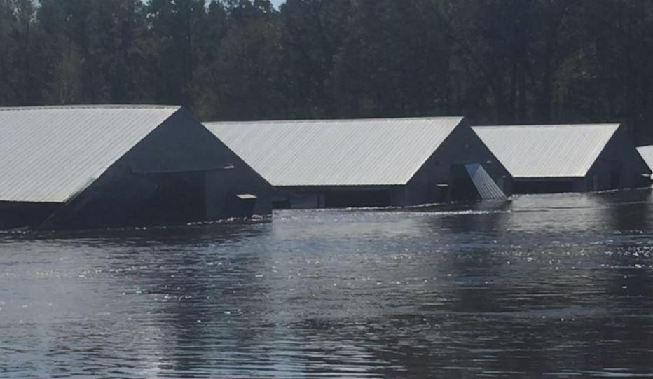 harnett county flooding_1537452567679.JPG.jpg