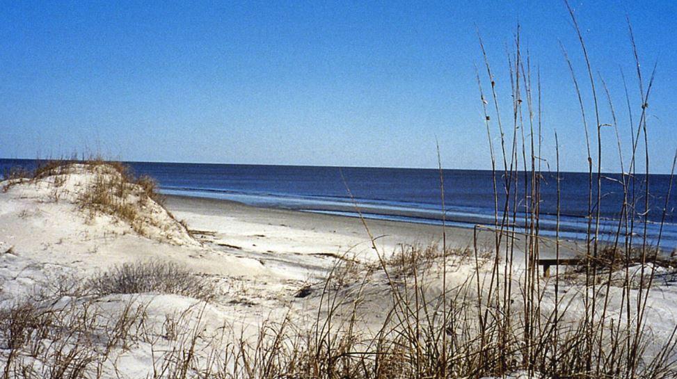 north myrtle beach wbtw_1545018885429.JPG.jpg