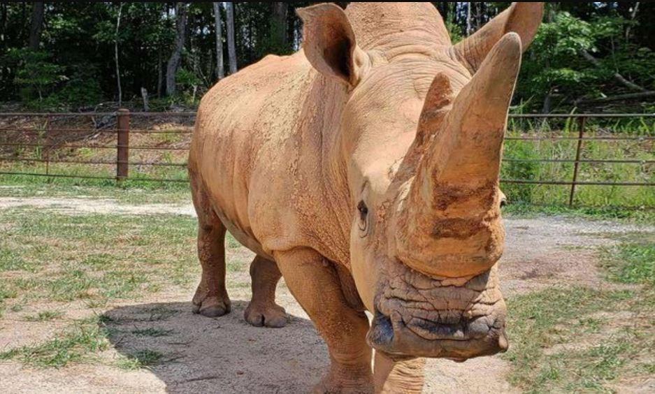 rhino zoo_1550354505289.JPG.jpg