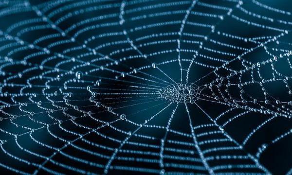 spider web generic image_1556798314386.jpg.jpg