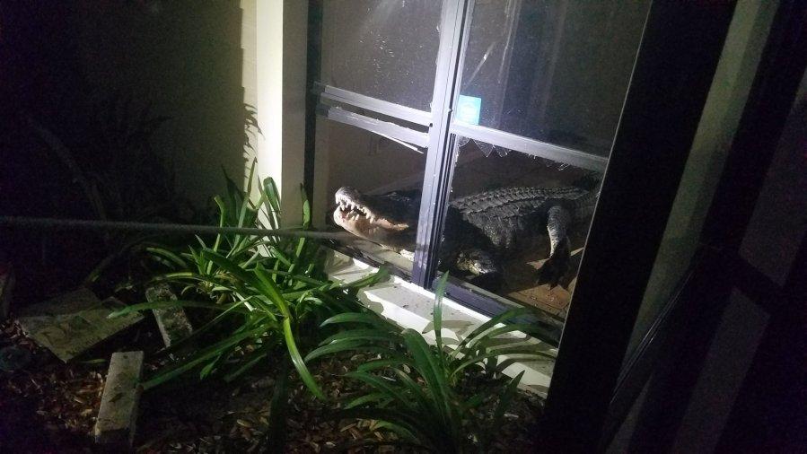 Resultado de imagen para Florida woman: Gator crashing into home was a 'fun thing'