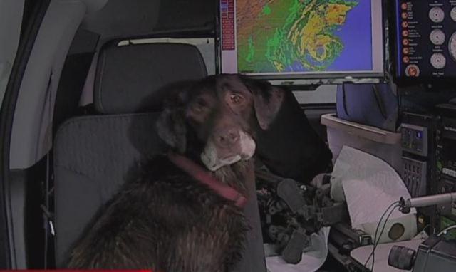 CBS 17 crew at NC coast rescues injured dog during Dorian
