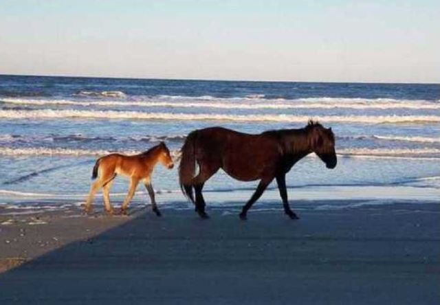 Damage from Dorian, rain allows wild horses to roam village