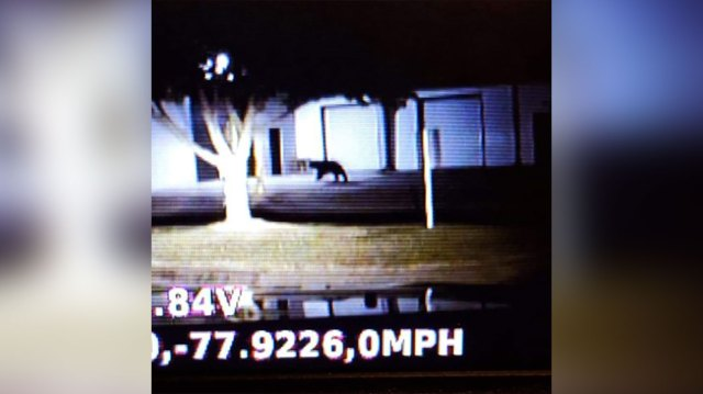 'Do not approach': Bear spotted in town by Wilson police officer